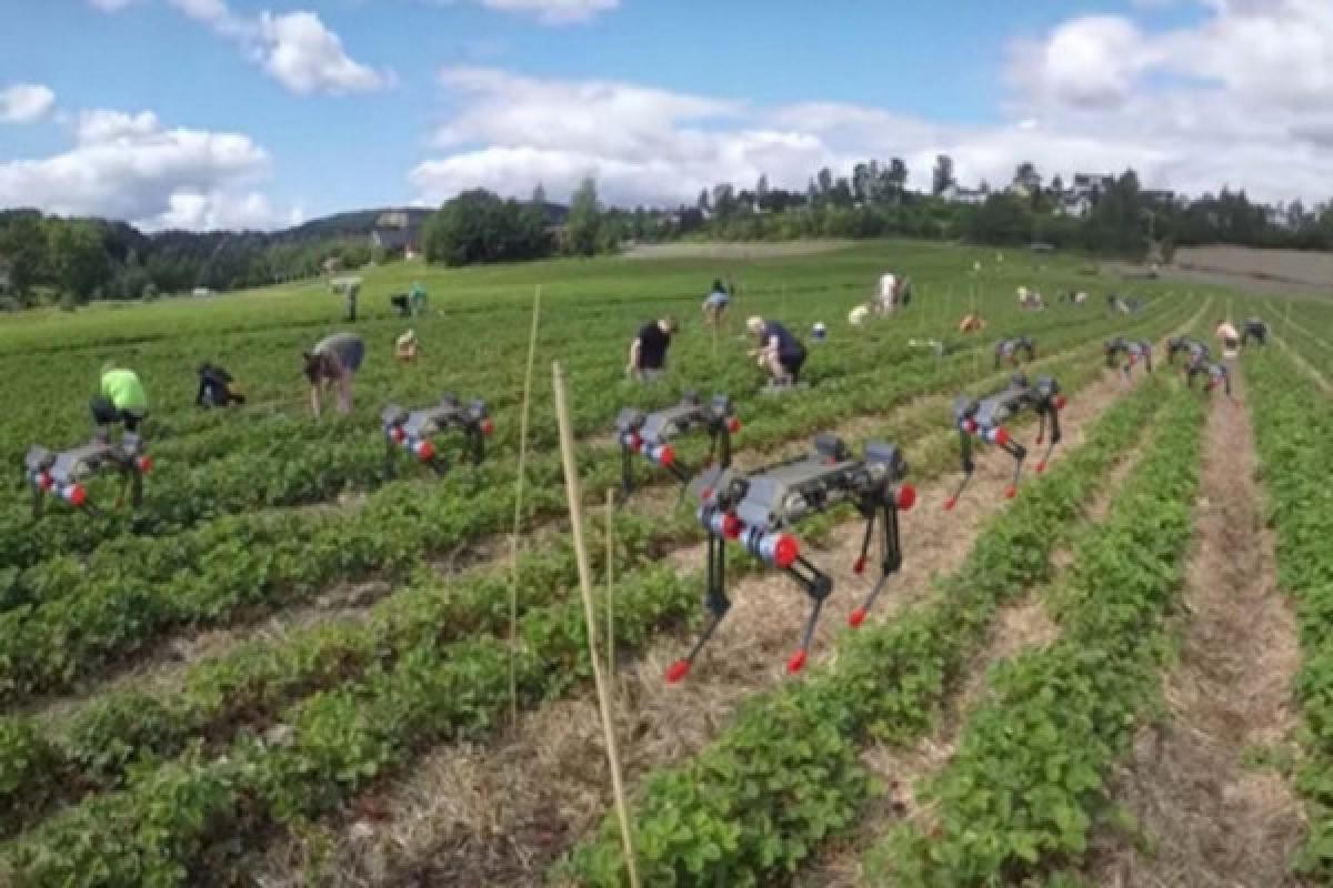 Собака-робот может как собирать урожай в поле, так и переносить его по полю и не только