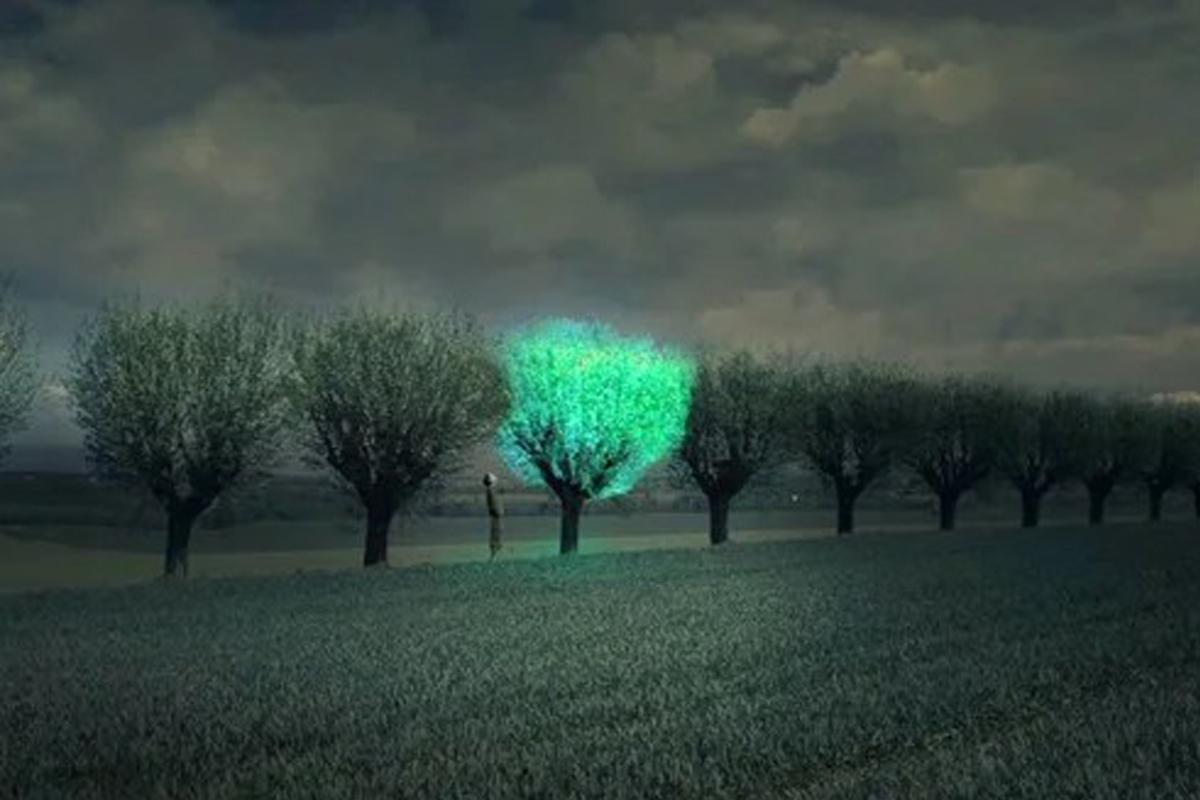 Деревья будут освещать улицы