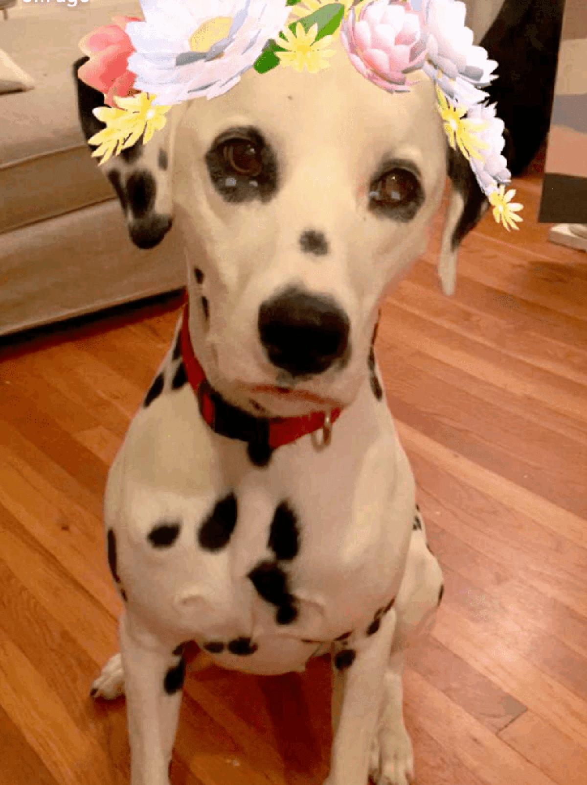 В Snapchat появились маски и эффекты для собак
