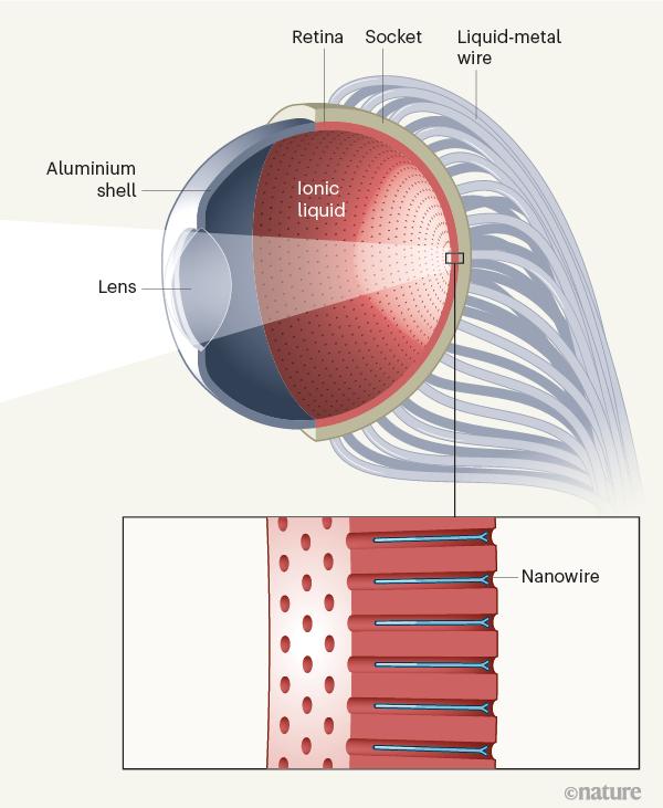 Гонконгские ученые создали электрохимический глаз, который распознает буквы